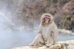 Albern Sie in einem natürlichen onsen (heiße Quelle) herum, gefunden im Jigokudani-Affe-Park oder im Schnee-Affen Lizenzfreie Stockbilder