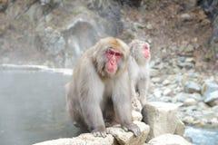 Albern Sie in einem natürlichen onsen (heiße Quelle) herum, gefunden im Jigokudani-Affe-Park oder im Schnee-Affen Stockfotos