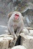 Albern Sie in einem natürlichen onsen (heiße Quelle) herum, gefunden im Jigokudani-Affe-Park oder im Schnee-Affen Stockfoto