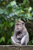 Albern Sie Familie am heiligen Affewald Ubud Bali Indonesien herum Lizenzfreie Stockbilder