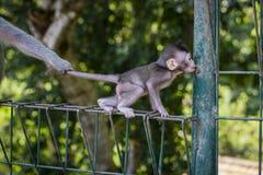 Albern Sie Familie am heiligen Affewald Ubud Bali Indonesien herum Lizenzfreie Stockfotografie