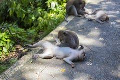 Albern Sie Familie am heiligen Affewald Ubud Bali Indonesien herum Stockbild