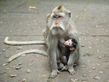 Albern Sie Familie in heiligen Forest Sanctuary, Bali, Indonesien herum Lizenzfreie Stockfotos