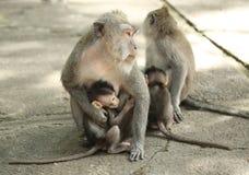 Albern Sie Familie in heiligen Forest Sanctuary, Bali, Indonesien herum Stockbild