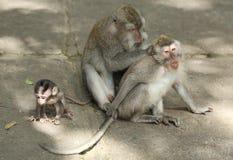 Albern Sie Familie in heiligen Forest Sanctuary, Bali, Indonesien herum Lizenzfreie Stockbilder