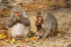 Albern Sie Familie mit dem Baby herum, das Früchte, Indien sitzt und isst Stockbild