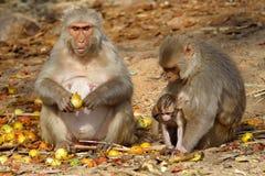 Albern Sie Familie mit dem Baby herum, das Früchte, Indien sitzt und isst Stockfoto