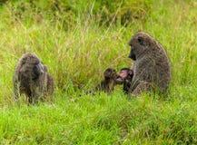 Albern Sie Familie mit einem Baby, junge Affen Kuss, Affefamilie an herum Stockfotografie