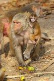 Albern Sie Frau mit dem Baby herum, das Frucht, Indien isst Stockfotografie