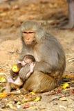 Albern Sie Frau mit dem Baby herum, das Frucht, Indien isst Lizenzfreies Stockbild