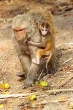 Albern Sie Frau mit dem Baby herum, das Frucht, Indien isst Lizenzfreie Stockfotos