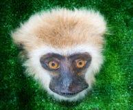 Albern Sie Gesicht, den Säugetierprimas in der Ausstellung herum Stockbilder