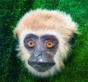Albern Sie Gesicht, den Säugetierprimas in der Ausstellung herum Stockbild
