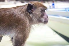 Albern Sie herum und auf einem Boot, in Thailand sitzen Stockfotos