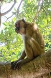 Albern Sie im Baum aufmerksam sitzen und schauen herum Stockfoto