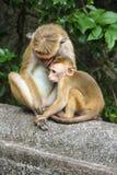 Albern Sie im natürlichen Einstellungsaffen mit jungem Babyaffen herum Stockbilder