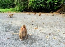 Albern Sie im tropischen Wald, exotischer Tieraffe in der wilden Natur herum Stockbild
