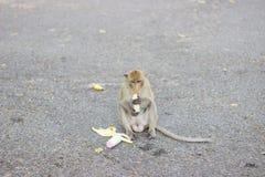 Albern Sie isst Banane und sitzt auf Straße herum Stockfoto