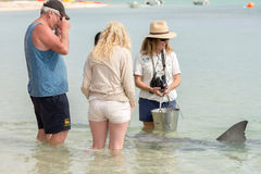 ALBERN Sie MIA, AUSTRALIEN - AUGUST, 28, 2015 - Delphine nahe dem Ufer kontaktieren Menschen herum Lizenzfreies Stockfoto