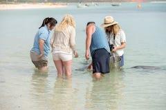 ALBERN Sie MIA, AUSTRALIEN - AUGUST, 28, 2015 - Delphine nahe dem Ufer kontaktieren Menschen herum Lizenzfreie Stockfotografie