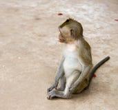 Albern Sie mit einer Haarspange in seinem Mund nahe dem Tempel von Wat Trai herum Stockfotos