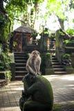 Albern Sie Porträt vom heiligen Affen Forest Sanctuary in Ubud, Bali, Indonesien herum Stockfoto