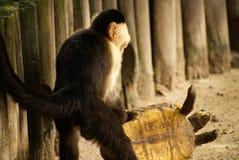 Albern Sie Spiele mit einer Schildkröte auf der Insel Mucura Kolumbien herum Lizenzfreie Stockfotografie