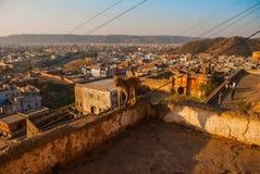 Albern Sie Tempel herum Der Affe ist auf der Wand jaipur Indien Stockfoto