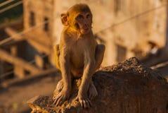 Albern Sie Tempel herum jaipur Indien Stockfoto