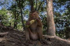 Albern Sie in Thailand herum, das köstliche Banane sitzt und isst Lizenzfreie Stockfotografie