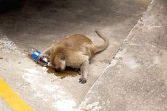 Albern Sie trinkendes sprudelndes Wasser auf der Straße in Thailand herum Stockfotos