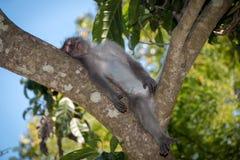 Albern Sie Wald, Ubud, Bali, Indonesien herum Lizenzfreies Stockfoto