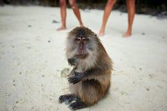 Albern Sie WarteLebensmittel im Affe-Strand, Phi Phi Islands, Thaila herum Lizenzfreie Stockbilder