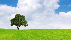 albero Immagine Stock