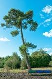 albero Immagini Stock