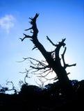Albero Fotografie Stock Libere da Diritti