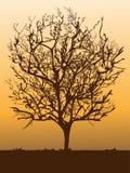 Albero Fotografia Stock