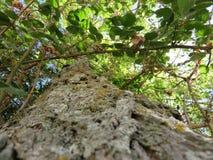 Albero Royaltyfri Foto