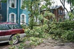 Albero abbattuto in via dopo la tempesta violenta Immagini Stock