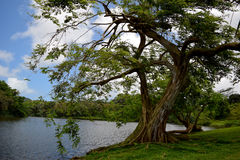 Albero accanto ad un lago Immagine Stock Libera da Diritti