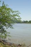 Albero accanto al fiume Immagini Stock Libere da Diritti