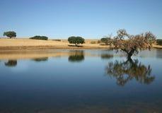 Albero in acqua fotografie stock