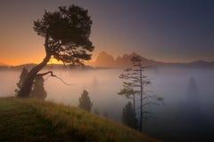 Albero ad alba nebbiosa nelle alpi del sud del Tirolo Fotografia Stock