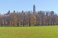 Albero al Central Park Immagine Stock Libera da Diritti