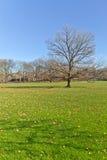 Albero al Central Park Fotografia Stock Libera da Diritti