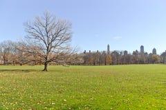 Albero al Central Park Immagini Stock