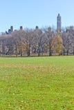 Albero al Central Park Fotografia Stock