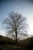 Albero al lato della carreggiata in paese Fotografia Stock Libera da Diritti