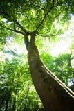 Albero al sole Fotografia Stock Libera da Diritti