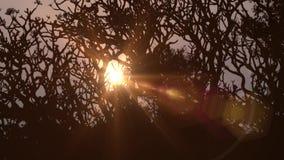 Albero al tramonto in India archivi video